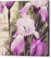 The Iris Undaunted Canvas Print