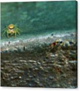 The Itsy Bitsy Spider Canvas Print