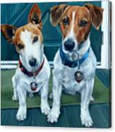The Jack Russel Duo Canvas Print
