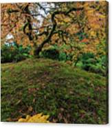 The Japanese Maple Tree In Autumn 2016 Canvas Print