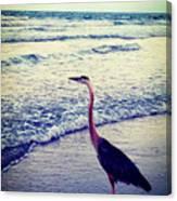 The Joy Of Ocean And Bird Canvas Print
