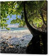 The Jungle At Onomea Bay  Canvas Print