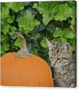 The Kitten And The Pumpkin Canvas Print
