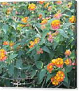 The Lantana In The Near 20 Canvas Print