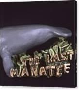 The Last Manatee Canvas Print