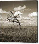 The Last One Standing - Sepia Canvas Print