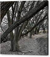 The Leaning Boughs Canvas Print