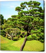 The Leaning Tree Canvas Print