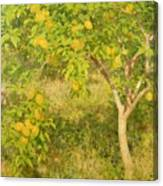The Lemon Tree Canvas Print