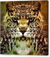 The Leopard Of The Temple  Canvas Print