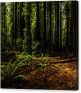 The Light In The Forest No. 2 Canvas Print