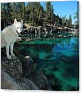 The Light Of Lake Tahoe Canvas Print