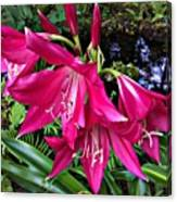 The Lilies Of Summer Canvas Print