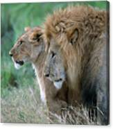 The Lion And His Lioness Canvas Print