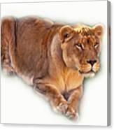 The Lioness - Vignette Canvas Print