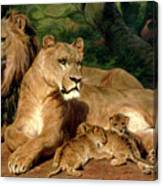 The Lions At Home Canvas Print
