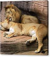 The Lions Canvas Print