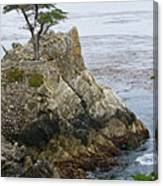 The Lone Cypress - California Canvas Print