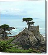 The Lone Cypress Stands Alone Canvas Print