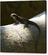 The Lone Lizard Canvas Print