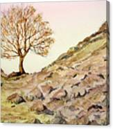 The Lone Sentry-sycamore Gap. Canvas Print