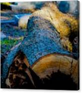 The Lonely Log Canvas Print