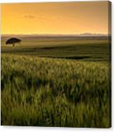 The Lonely Tree, Israel Landscape Canvas Print