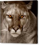 The Look - Florida Panther Canvas Print
