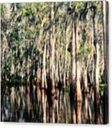 The Louisiana Bayou Canvas Print