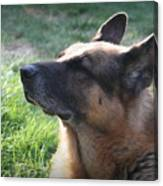 The Love Of An Old Dog Canvas Print