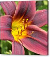 The Love Of Lilies Canvas Print