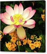 The Lovely Lotus Canvas Print