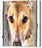The Loving Eyes Of A Greyhound Canvas Print