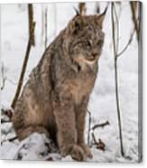 The Lynx Canvas Print