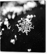 The Magic In A Snowflake Canvas Print