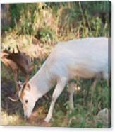 The Magical Deer 3 Canvas Print