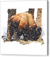 The Majestic Bison Canvas Print