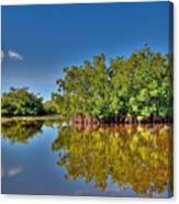 The Mangrove Coast Canvas Print