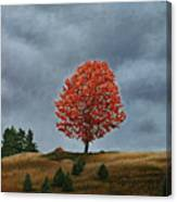 The Maple On The Ridge Canvas Print