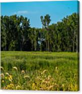 The Marsh  Canvas Print
