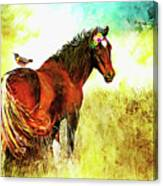 The Marvelous Mare Canvas Print