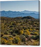The Mcdowell Mountains Canvas Print