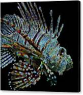 The Mighty Lion Fish Canvas Print