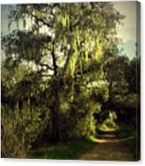 The Mighty Oaks Of Garland Ranch Park 2 Canvas Print