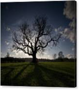 The Mighty Tree Canvas Print