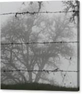 The Mist -- Oak Tree Behind Barbed Wire On Mt. Hamilton, California Canvas Print