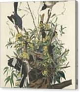 The Mockingbird Canvas Print