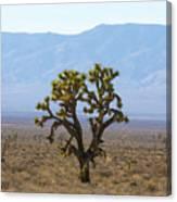 The Mojave Desert Canvas Print