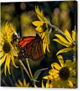 The Monarch And The Sunflower Canvas Print