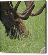 The Moose Canvas Print